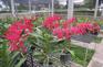 蘭花蝴蝶園