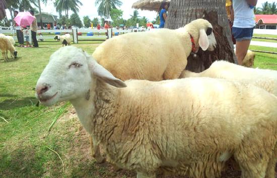 趣緻綿羊樂園
