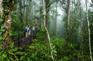 熱帶雨林區