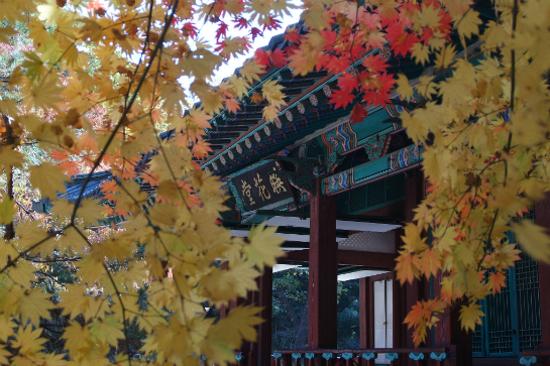 首爾昌慶宮秋天