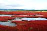 能取湖紅色珊瑚草