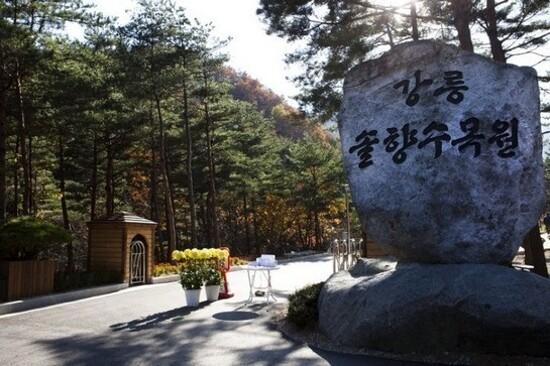 江陵松香樹木園