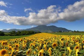 夏の北海道 皇牌度假5天之旅 《7月1日至9月15日出發》