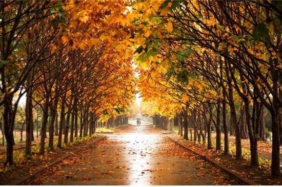 慶州森林環境研究所散步路