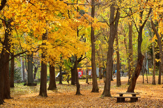 北海道円山公園