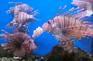 芽莊海洋館