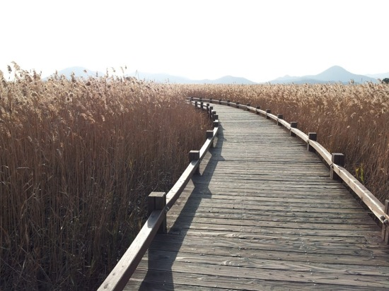順天灣濕地