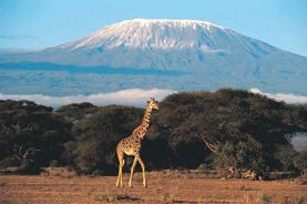 【稅項全包】【4人成行】東非肯尼亞8天原野獵奇之旅