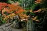和歌山紅葉溪庭園