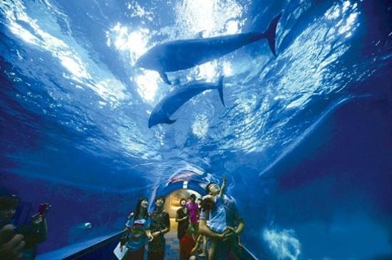 長生浦鯨魚生態體驗館