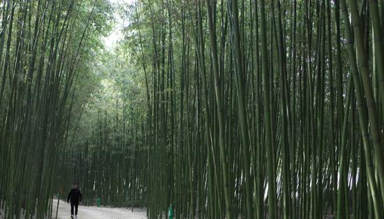 太和江大公園- 十里竹林