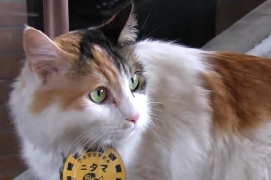 和歌山電鐵貓站長Nitama