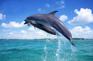 ABC沙灘俱樂部海豚追蹤