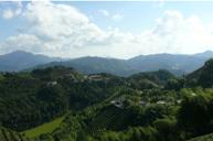 龍岩雲頂茶園(親手採茶、製茶、暢玩園內高爾夫球場)