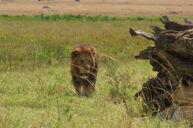 瑪沙瑪拉野生動物保護區