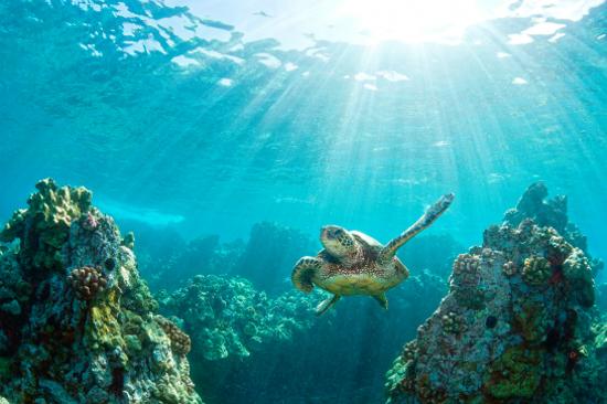 乘坐玻璃底船觀賞珊瑚