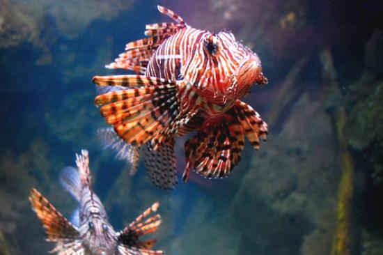Aquaria KLCC海洋水族館