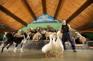 愛哥頓牧羊場