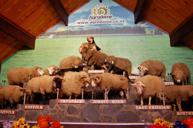 愛哥頓牧羊場卡車體驗之旅
