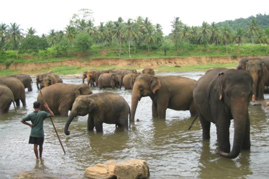 賓拿華拉大象保育中心