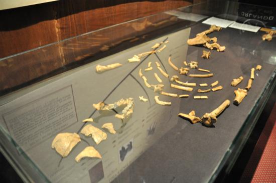 史上最早、最完整的直立行走人類祖先遺骸「Lucy」