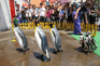 登別Marine Park企鵝巡遊