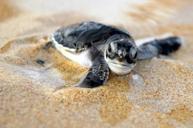 頻臨海龜保育中心