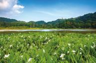 屏東東源濕地生態區