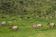 哈斯台國家公園