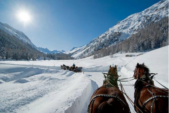 乘著馬車遊覽羅莎河谷