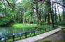 芬多精森林漫步