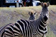 塔龍加西部平原動物園