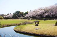 「賞櫻名所」及「日本三大庭園之一」岡山後樂園