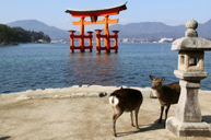 「世界文化遺產」嚴島神社