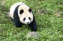 Panda World 熊貓世界