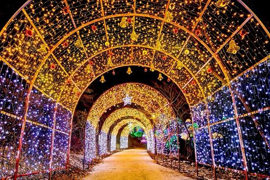五彩星光庭園展