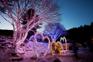 晨靜樹木園(五色星光庭園展