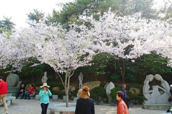 海東龍宮寺(賞櫻花)
