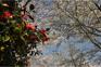 CamelliaHill山茶花之丘