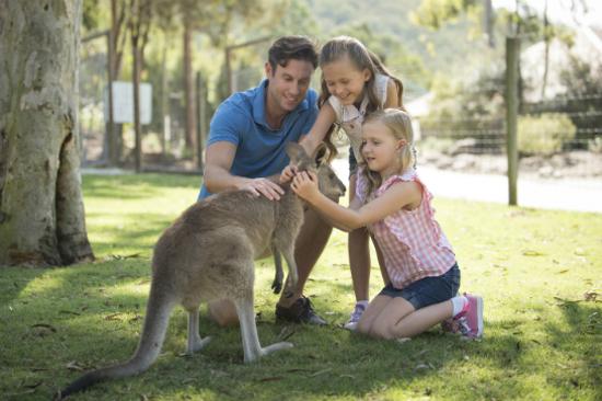 Paradise_Country_Kangaroos