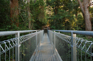依拉瓦拉樹頂漫步之旅