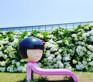 Camellia Hill(賞繡球花)(6月25日至7月31日出發適用)