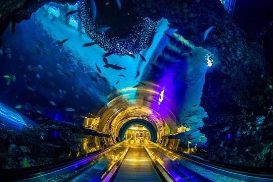 國立海洋生物博物館海底隧道