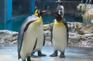 長崎企鵝水族館