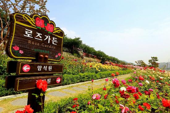 三陟玫瑰園