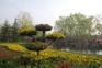 牡丹園(3月29日至4月27日出發)