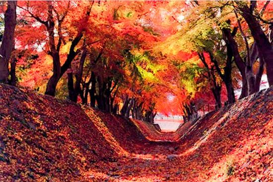 河口湖紅葉迴廊