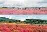《增遊》楊州Nari公園(賞波波草及粉紅亂子草)(10月1日至31日出發適用)