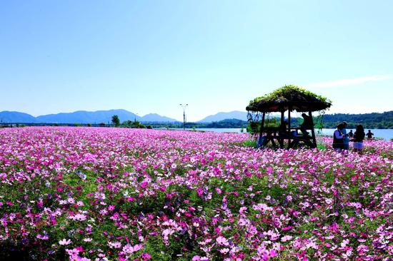《增遊》九里漢江公園(賞波斯菊)(9月20日至30日出發適用)