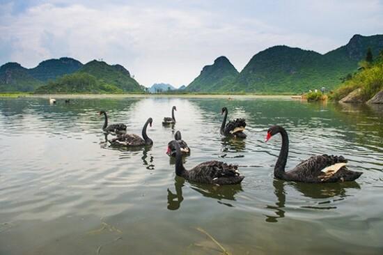 普者黑天鵝湖景區